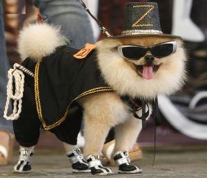 designer-dog-apparel