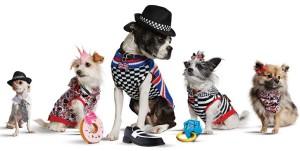 dog-clothing-line