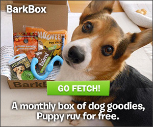 BarkBox Dog Lovers